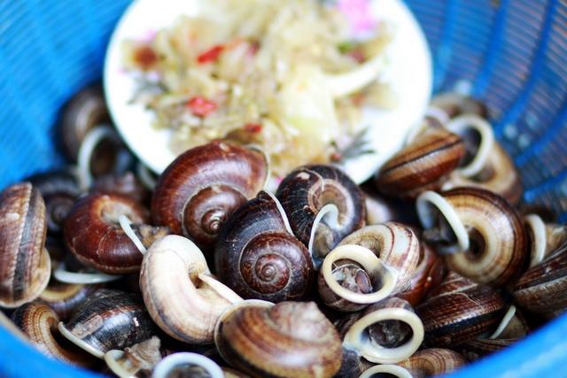 snail_by_pinnee_600